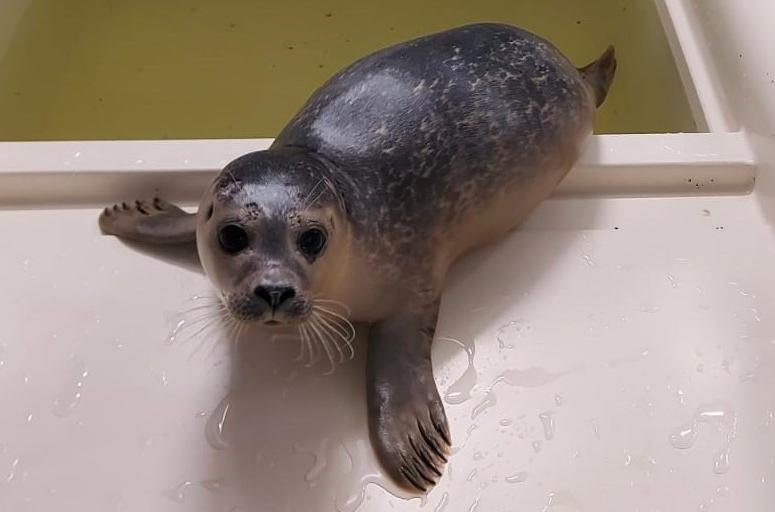 A-Seal: De naam van onze geadapoteerde zeehond is….